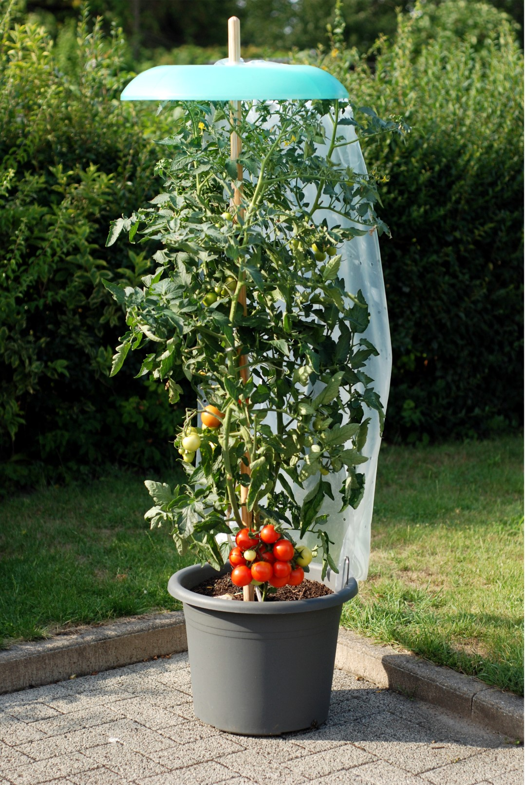 khw tomatenhut als tomatenschutz im 2er set hammerkauf. Black Bedroom Furniture Sets. Home Design Ideas