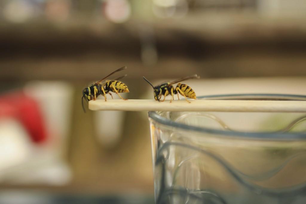 Friedliche Losungen Statt Chemie Einsatz Das Hilft Gegen Wespen