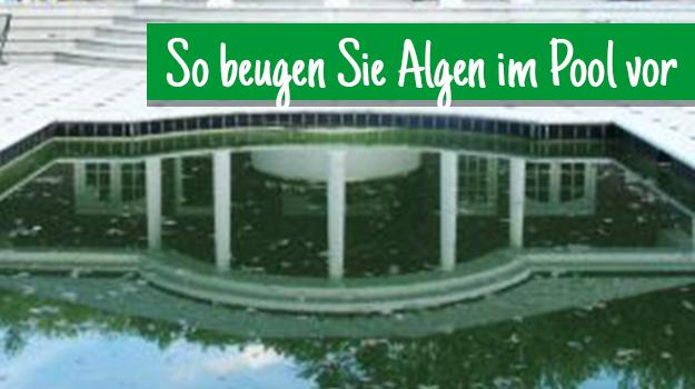 so beugen sie algen im pool vor hammerkauf ratgeber blog. Black Bedroom Furniture Sets. Home Design Ideas