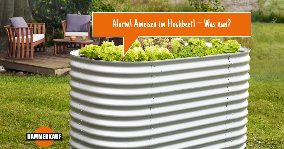 Atemberaubend Alarm! Ameisen im Hochbeet! – Was nun? | Hammerkauf Ratgeber @ZY_03